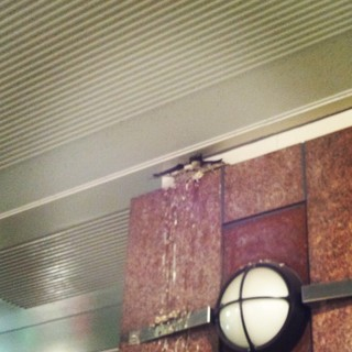 ツバメの巣立ち